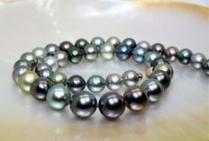 Round cultured Tahitian pearl necklace, Ø 9-12 mm