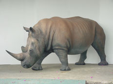 Very exclusive sculpture of a life-sized rhino