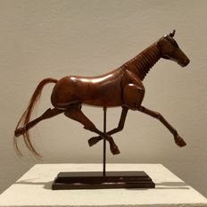 Horse model on wooden stand - fully moveable joints, cervical spine, head and muscles neck, leg/shoulder