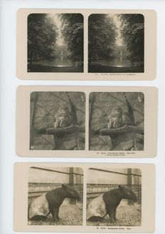 Very old stereo photos with e.g. zoo Germany, 193x