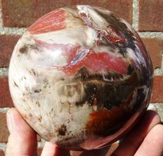 Colourful Petrified Wood sphere - 12,3cm - 2,9kg