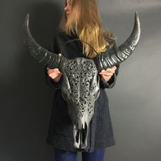 Skull Art - Authentic carved skull of a water buffalo - matted grey (64 cm long x 66 cm wide)