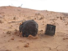 Beni M'Hira Meteorite - Witnessed Fall - January 8, 2001 - 28.2g Specimen with in situ pictures + GPS coordinates