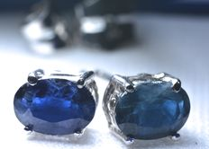 White gold (18 kt) button earrings with large blue oval sapphires. No reserve price.