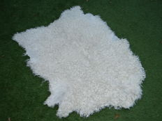 Interesting Goatskin, with curly coat - Capra aegagrus hircus-  125 x 100cm