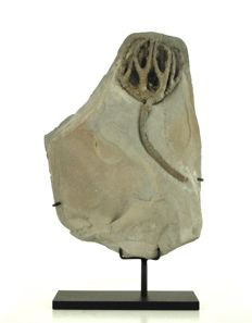 Fossil crinoid - Onychocrinus ulrichi - Block is 300 x 210mm