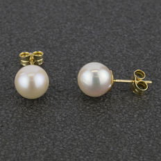 18 kt yellow gold earrings with Akoya cultured pearls measuring 8.5 mm (approx.).