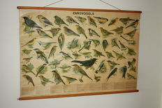 Linen school map with images of songbirds