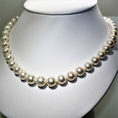 Fabulous necklace made of round freshwater cultured pearls, Ø 8.2 x 12.1 mm - 18 kt white gold clasp