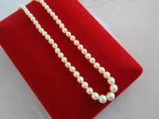 Freshwater cultured pearls necklace with 18 kt gold clasp - length: 42.5 cm