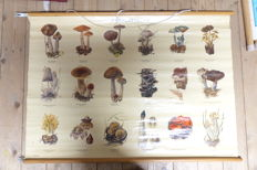 Roll up linen school poster with mushrooms (second poster from the series)