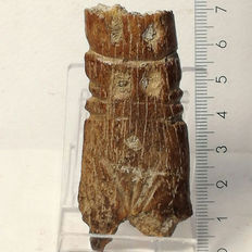 Neolithic bone idol / mother standing – 70 x 32 mm