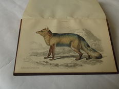 Lieut.-Col Charles Hamilton Smith - Mammalia Dogs - 2 volumes - without date (ca. 1840)