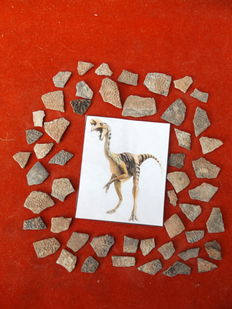 Dinosaur egg shells - Oviraptor - 27 mm to 12 mm (50 pieces)
