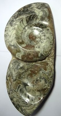 Fossil plate with two hand-polished ammonites, 2.62 kg