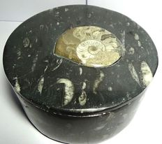 Decorative case with Amonite, carved and polished by hand in fossil stone - 1.52 kg