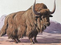 "Neave Parker (1910-1961) - Original illustration ""Yak"" - early 1950s"