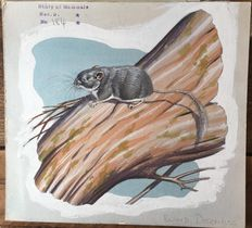 "Neave Parker (1910-1961) - Original illustration ""Blind dormouse"" - early 1950s"