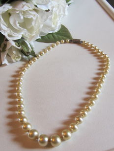 Chocker necklace of saltwater cultured pearls with a silver clasp