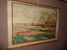 "Beautiful colourful school poster / school map with the title ""flower bulb fields near Lisse"" after a watercolour painting by A.L. Koster."