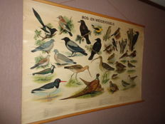 """Old school poster / school map on linen """"forest and meadow birds.""""   Images of 30 birds found in the forest and meadows such as lapwing, pheasant pair, golden oriole, etc."""