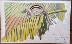 "Neave Parker (1910-1961) - Original illustration ""Palm squirrel"" - early 1950s"
