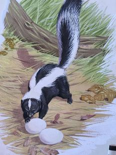 Neave Parker (1910-1961) - Originele illustratie 'Striped skunk' - beginjaren '50