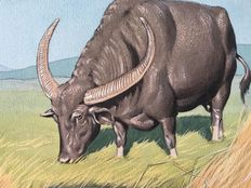 "Neave Parker (1910-1961) - Original illustration ""Indian Buffalo"" - early 1950s"