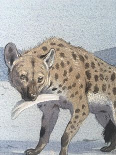 "Neave Parker (1910-1961) - Original illustration ""Spotted hyena"" - early 1950s"