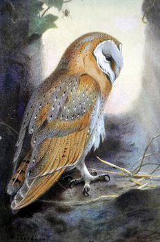 Eight ornithological prints by Archibald Thorburn (1860 - 1935) - from 'British Birds' - 1926