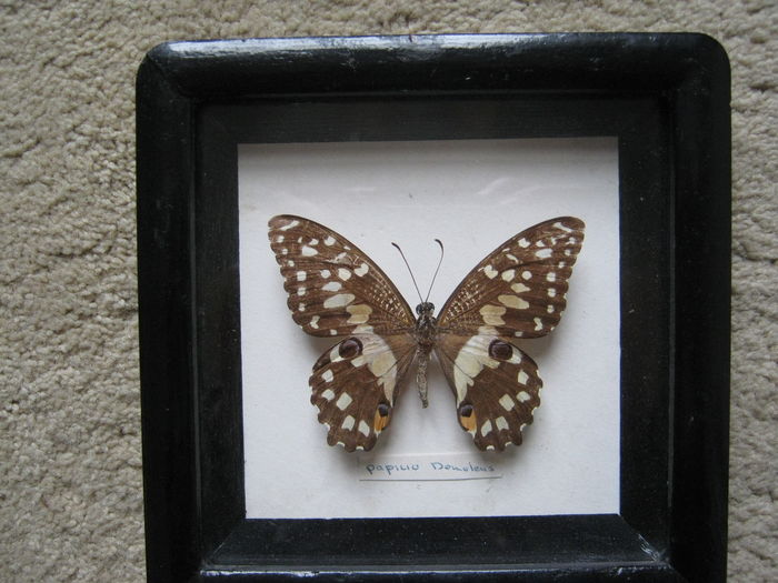 Vintage Chinese display frames - Butterflies and Moths - 25 x 15, 14 ...