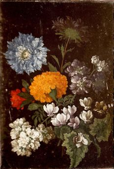 Dutch field of Monnoyer - still life