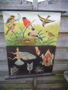 Lovely school poster by Jung-Koch-Quentell; Finches