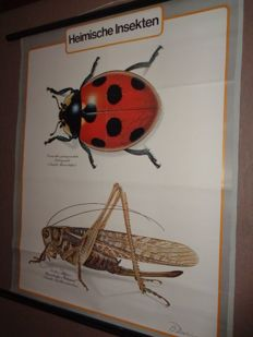 """Nice old school poster / school map on linen (insects) """"Ladybug and Grasshopper '"""