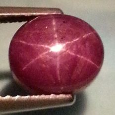 Star Ruby - 4.81 cts