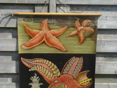 Lovely school poster of Jung-Koch-Quentell; 'Starfish' (incl. school poster, 'prehistoric creatures')