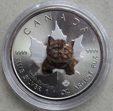 Canada – 5 dollars 2017 'Maple Leaf – British Shorthair kitten' – 1 oz silver
