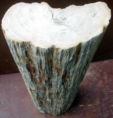 Mini side table made from a trunk of petrified wood - 55.5 x 21 x 12.5 cm - 26.6 kg