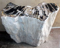 Trunk of Petrified Wood - 33 x 31 x 16 cm - 30.6 kilos