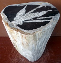 Side table from a trunk of petrified wood - 39.5 x 28.5 x 24 cm - 34.4 kg