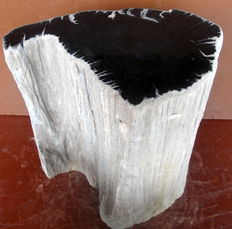 Side table of petrified wood - 36 x 29 x 20 cm. Weight 32.4 kg.