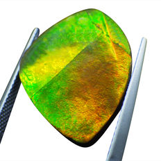 Ammolite - 12.80ct - No Reserve Price