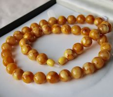 Necklace of 100% Baltic, egg yolk / butterscotch, amber beads, approx 44.3 g, Kaliningrad) around 1900-1920.