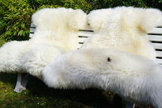 Two very large - XXL - thick - natural white sheepskins/lambskins