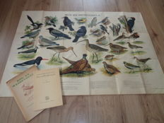 "Beautiful old folder with manual and school poster of ""forest and meadow birds"""