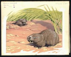 "Neave Parker (1910-1961) - Original illustration ""Mole rat"" - early 1950s"