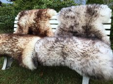 Lot with two very large XXL mouflon flamed sheepskins/lambskins