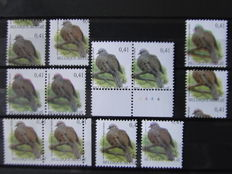 Eurasian collared dove - OBP 3135 - moved prints and moved colour prints