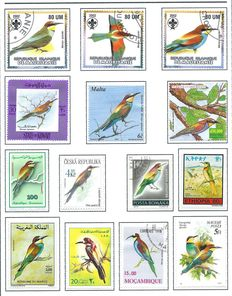 Birds – Topical collection in album, including kingfishers, among others