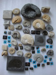 Collection of 65 Ammonites from Germany and France.